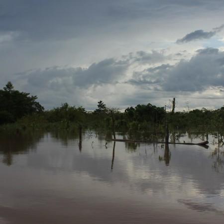 La Selva di Yurimaguas